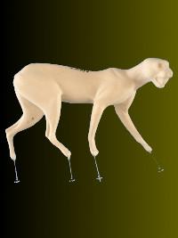 Luchs / Bobcat / Katze  Nr.G2089 laufend rechts 4,5-13-26-73-46